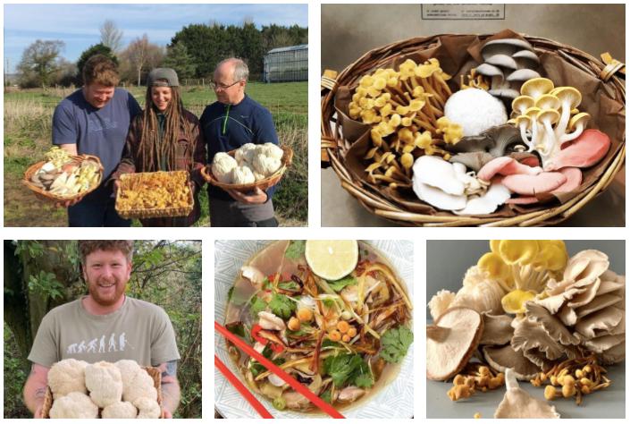 lion's mane - hedgehog - exotic - edible -rare- mushrooms-todelli-isle of wight mushrooms